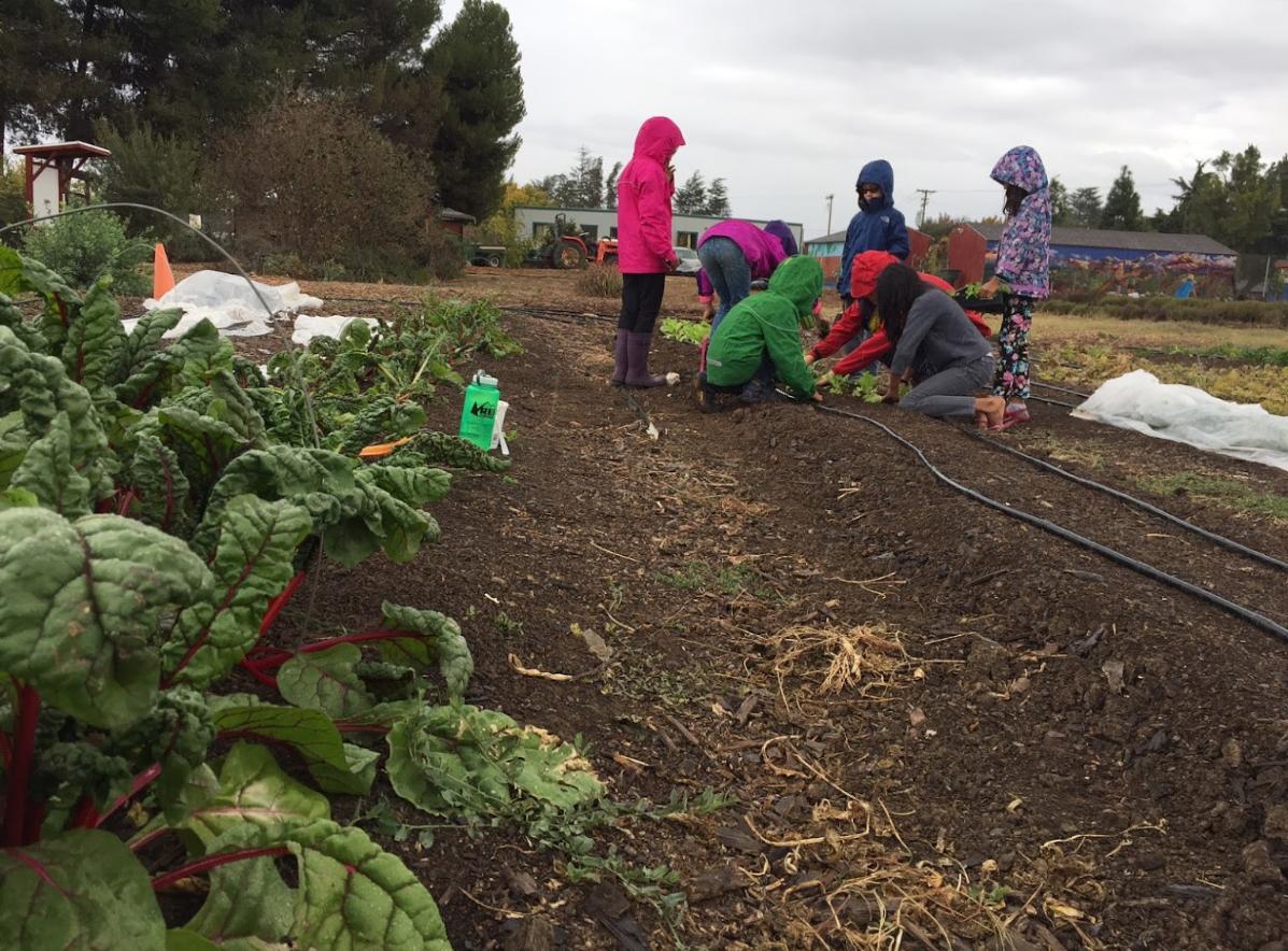 HandsOn Bay Area   GARDEN: The Farm at Santa Clara Unified Schools